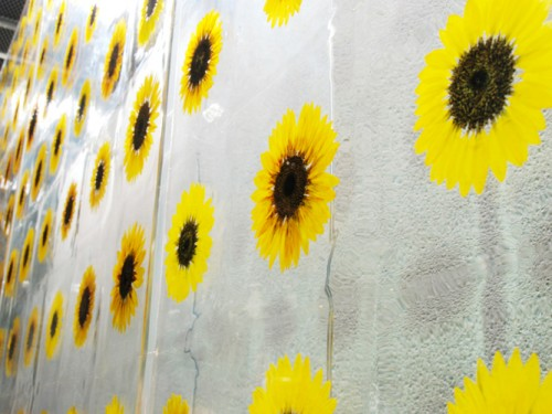 02_sunflower