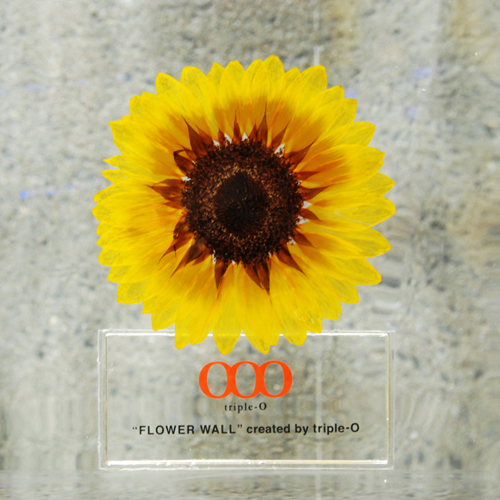 03_sunflower